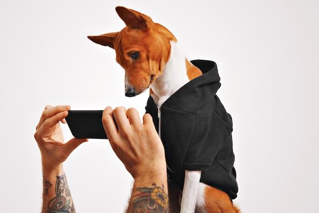 캐주얼 한 거리 옷을 입은 귀여운 강아지가 문신을 한 남자가 들고있는 검은 색 스마트 폰으로 동영상을 호기심에 봅니다.