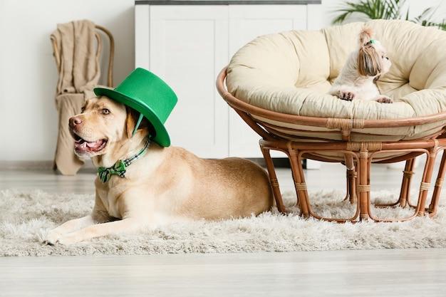 집에서 귀여운 강아지. 성 패트릭의 날 축하