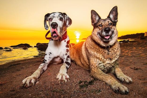 Симпатичные собаки, отдыхающие на пляже вечером