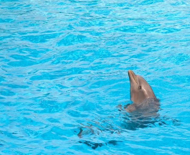 Милый дельфин