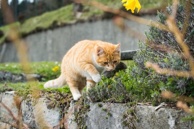 Милая домашняя кошка играет с травой