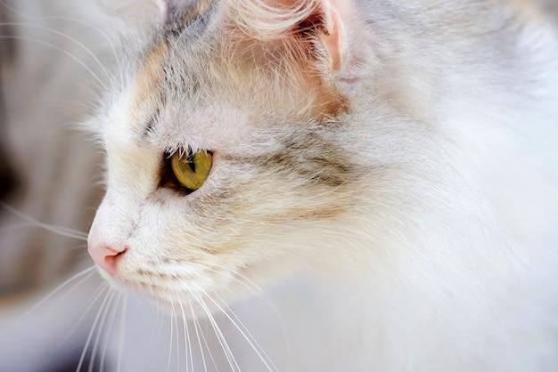Милая домашняя кошка с красивыми глазами крупным планом