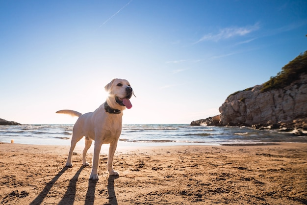 Cute domestic dog playfully running around and playing on the beach by the ocean