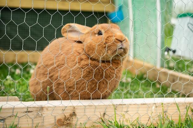 Coniglio peloso domestico sveglio in una gabbia durante il giorno