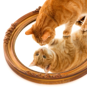Cute domestic ginger cat curiously looking at its own reflection in a mirror on a white surface