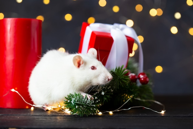 Cute domestic rat in a new year's decor.