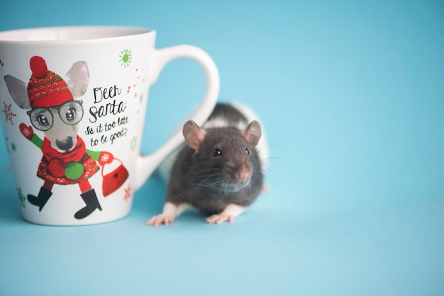 Cute domestic rat and white tea cup isolated on blue .concept of new year 2020.