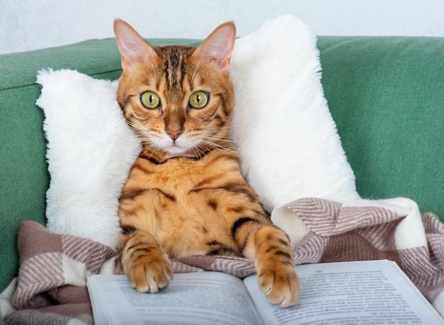 Милый домашний полосатый кот на диване с открытой книгой