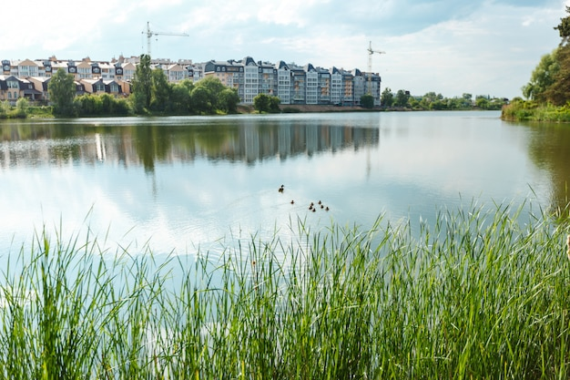 Cute ducklings (duck babies) following mother in a queue, lake. symbolic figurative harmonic peaceful animal family portrait on the background of buildings