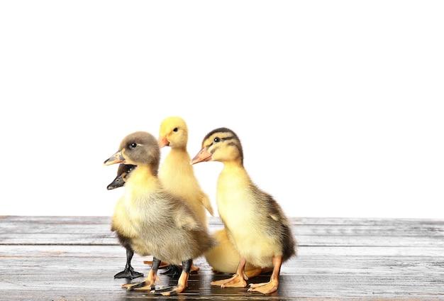 흰색 배경 테이블에 귀여운 ducklings