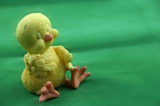 Cute easter chick, bird