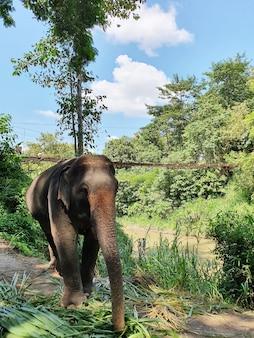 보호구에서 걷는 귀여운 코끼리