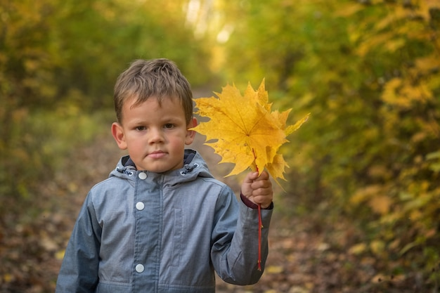 노란 단풍으로가 공원에서 귀여운 유럽 소년