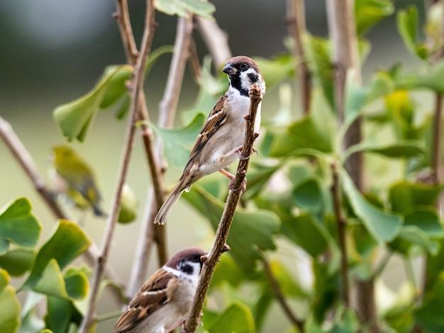 Милая экзотическая птица стоит на ветке дерева посреди леса