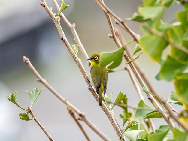 森の真ん中に木の枝の上に立ってかわいいエキゾチックな鳥
