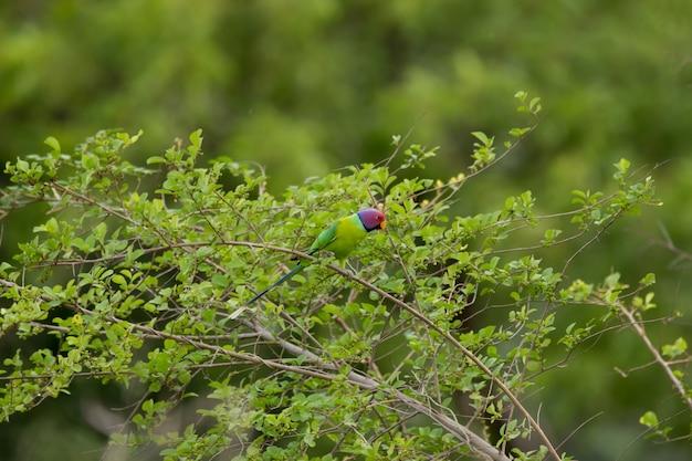 木の枝にかわいいエキゾチックなオウム