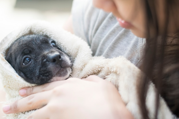 かわいい女性アジアのタイの十代の少女は、赤ちゃんのようなタオルで生まれたばかりのフレンチブルドッグの子犬を保持します