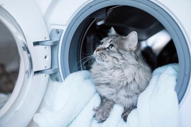 Милый пушистый кот, лежащий внутри стиральной машины.