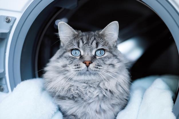 세탁 세탁기 안에 누워 귀여운 솜털 고양이.