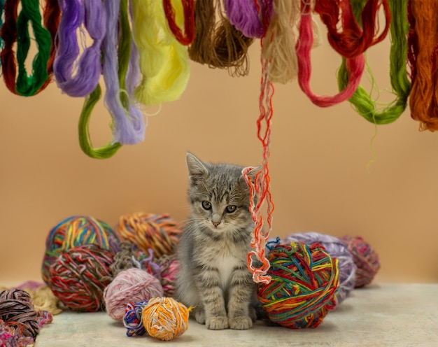 Cute fluffy cat playing with clew of thread