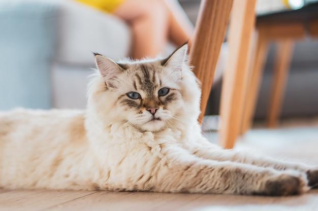 바닥에 앉아 귀여운 솜 털 고양이