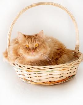バスケットを横になっている黄色の目でかわいいふわふわ生姜猫。赤猫を閉じます。隔離する。ホワイトスペース。