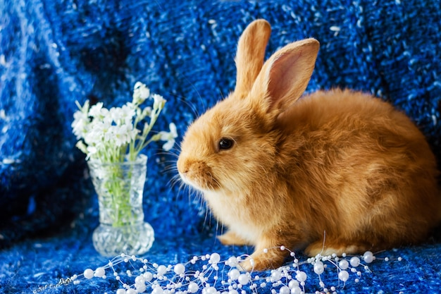 Cute fluffy ginger rabbit on a blue knitted background with a bouquet of flowers