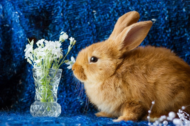 Cute fluffy ginger rabbit on a blue knitted blanket with a bouquet of flowers
