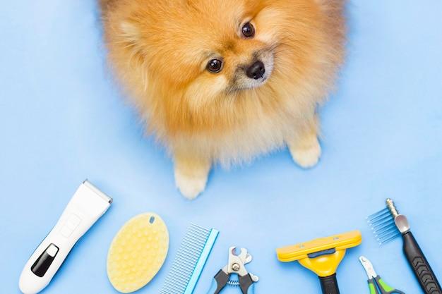 귀엽고 푹신한 포메라니안은 손질 도구로 둘러싸여 있습니다. 애완 동물 관리 도구. 위에서 프레임입니다. 파란색 배경입니다.
