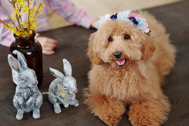 2匹の灰色のおもちゃのウサギと花瓶に黄色い花とカメラの前の木製のテーブルに座っている茶色のかわいいふわふわ純血種の犬