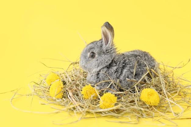 Милый пушистый кролик с сеном и цветами на желтом