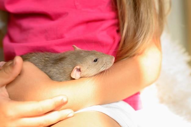 Милая пушистая крыса в руках яркая маленькая девочка