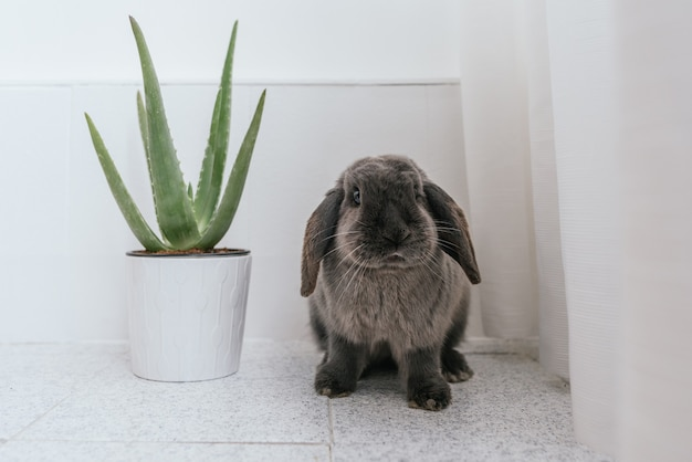 家で緑の観葉植物と鍋の近くに座っている灰色と白の毛皮を持つかわいいふわふわの斑点のあるウサギ