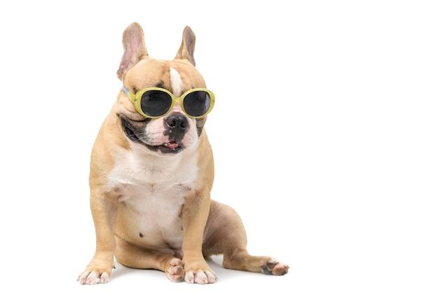かわいいフレンチブルドッグは、夏のコンセプトで白い背景、ペット、動物に分離されたファッションサングラスを着用します。
