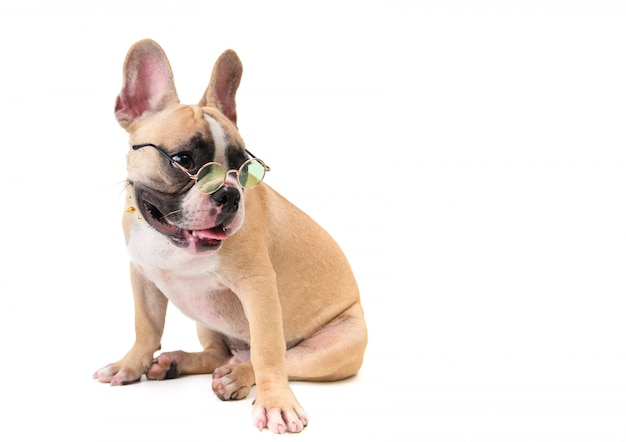 Cute french bulldog wear glasses and sitting isolated
