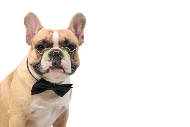 かわいいフレンチブルドッグは黒い蝶ネクタイとメガネを着用し、白い背景、ペット、動物のコンセプトで隔離のカメラを見てください