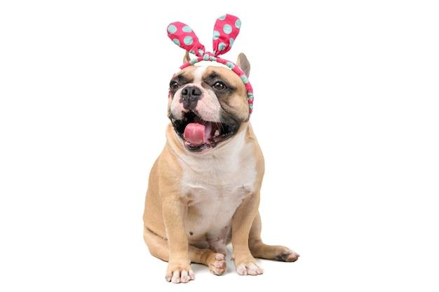 かわいいフレンチブルドッグは、白い背景、ペット、動物のコンセプトに分離されたヘッドバンドと笑顔を着用します。