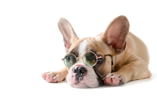 Симпатичные французский бульдог носить солнцезащитные очки и спать изолированные