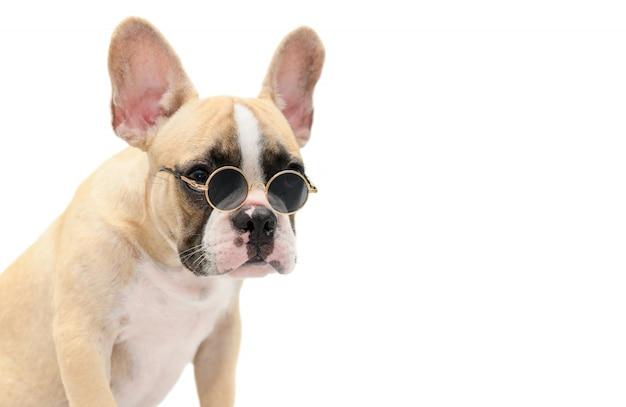 Симпатичные французский бульдог носить солнцезащитные очки изолированы