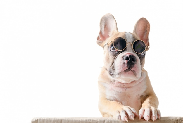 Cute french bulldog wear sunglass stand on box