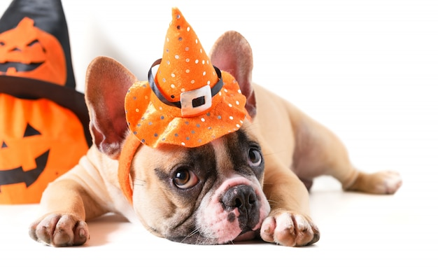 Cute french bulldog with hat halloween isolated