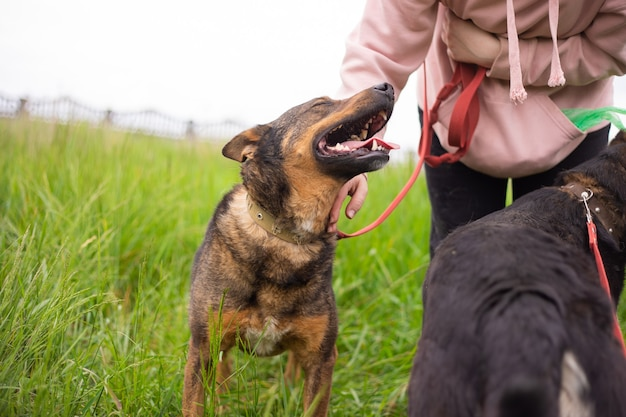 避難所でかわいいフレンドリーな犬が友人と家を待っています