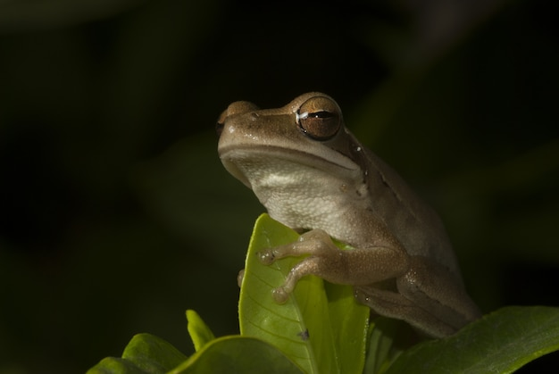 Cute frog sitting among the leaves with black background
