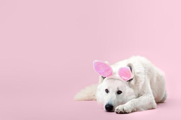 Симпатичные забавные уши кролика собаки