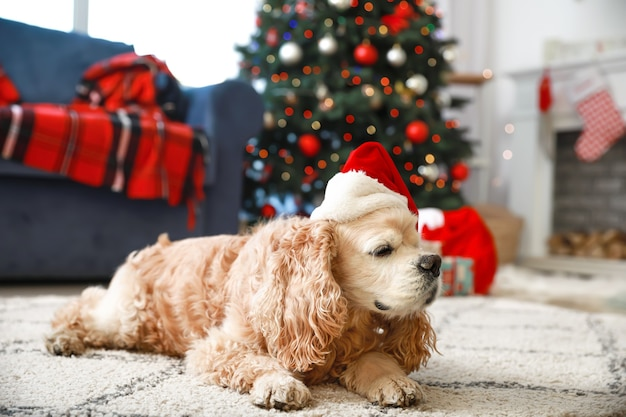 Милая забавная собака в шляпе санты дома в канун рождества