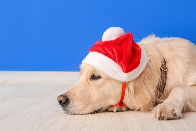 Милая забавная собака в шляпе санта возле цветной стены