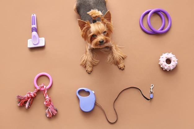 Cute funny dog and pet care accessories on color background