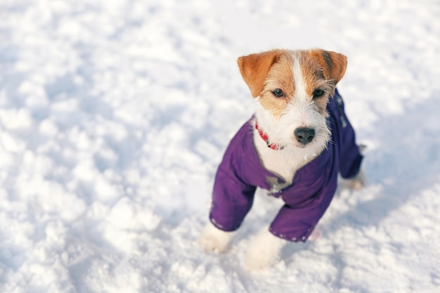 Cute funny dog in warm clothes outdoors on winter day