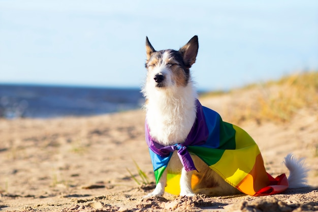 Cute funny dog with colorful rainbow gay lgbt flag. pride holiday concept. outdoor lifestyle