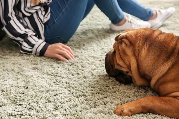 Милая забавная собака с хозяином дома